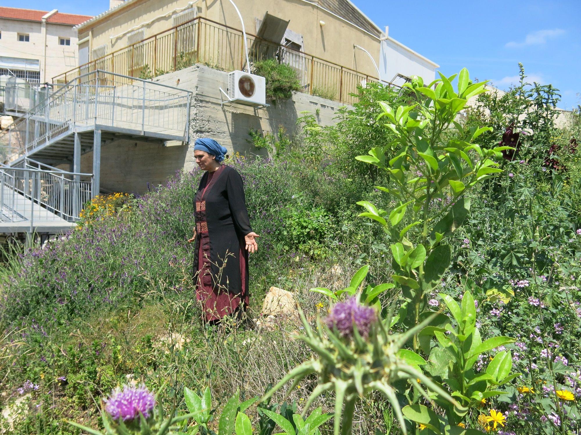 סדרת 'הצמחים שאבותינו העריכו'