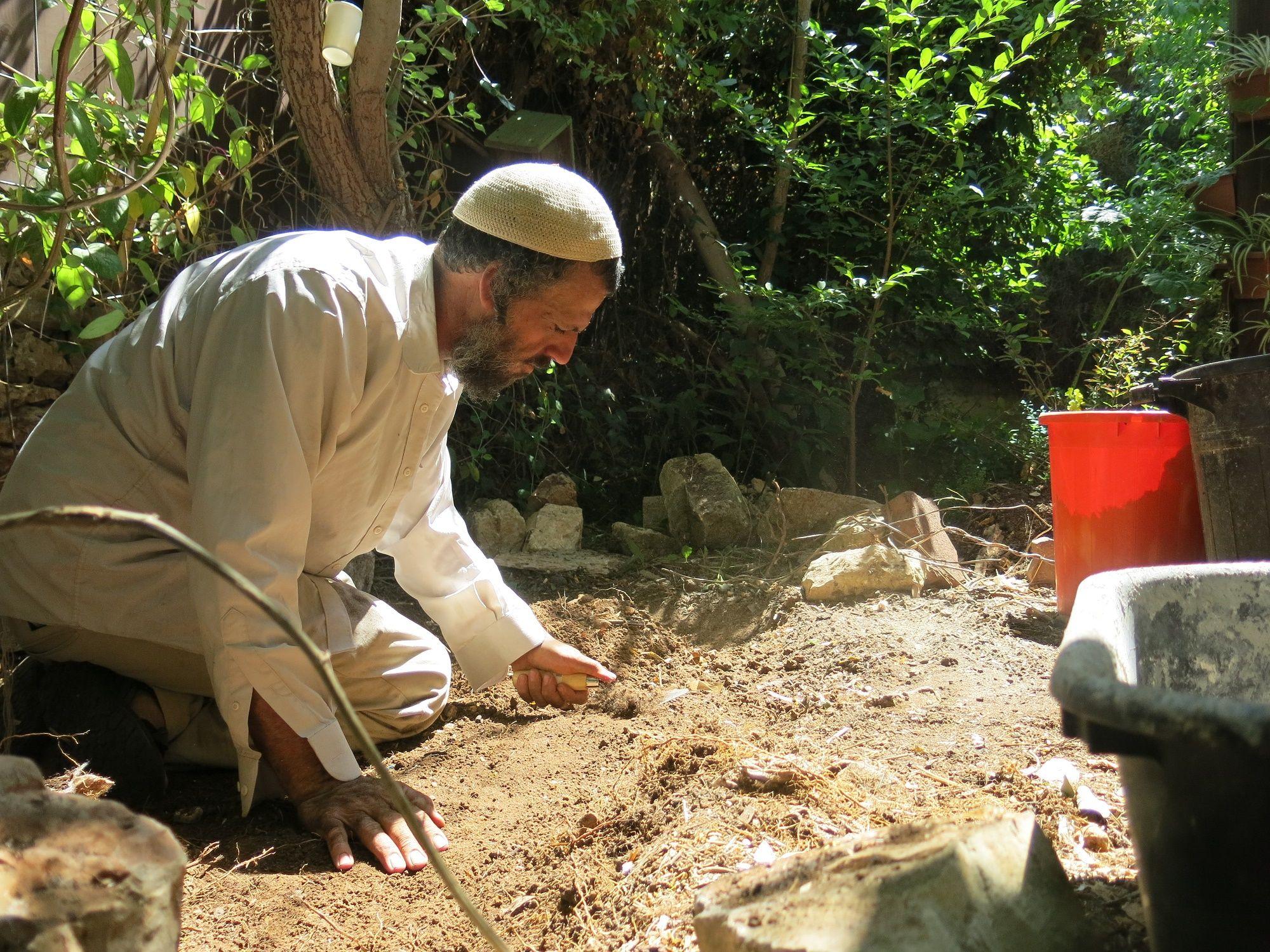 סדרת מערכים  הפנינג אקולוגי לחגי ישראל