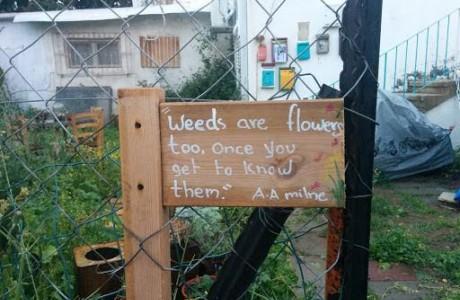 הרשמה לקורס אוכלות בגינה