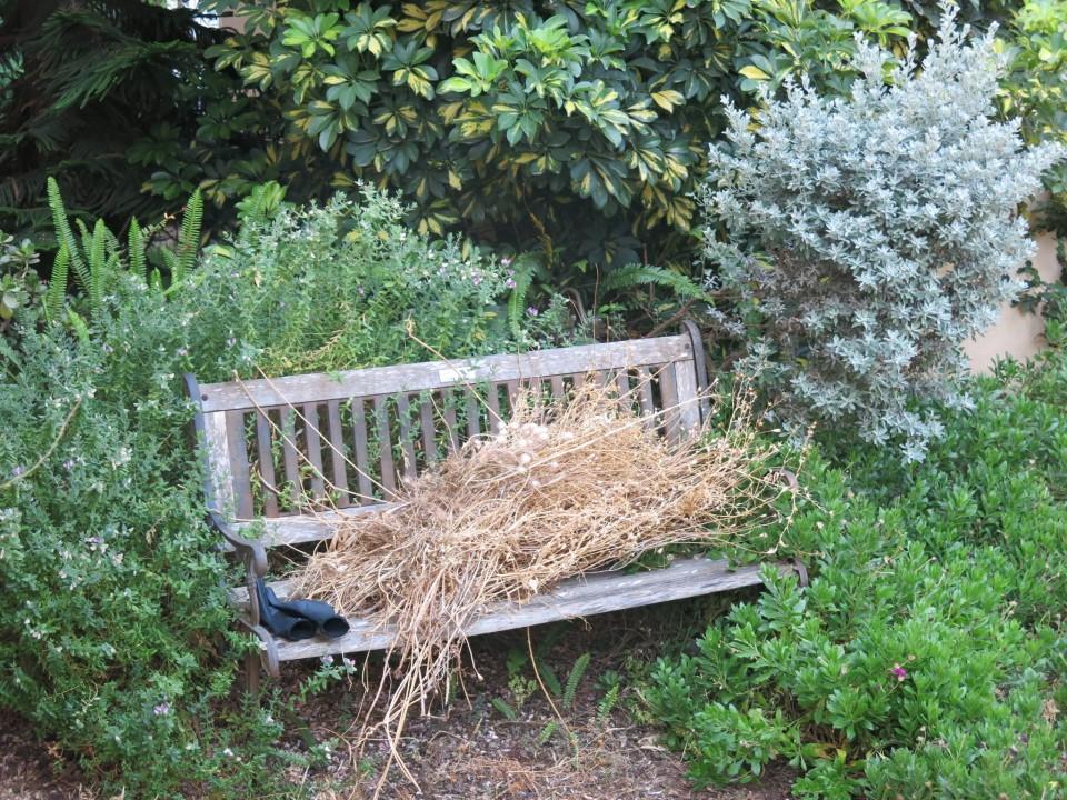 בוקר עם טליה בגינה שלך