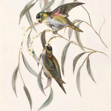 סדנת ציפור על עץ החיים - לעוף על הקשר הזוגי