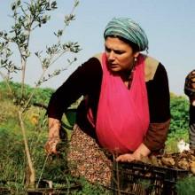 פרמקלצ'ר: לחיות ירוק