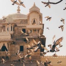 שניים יחד - הודו, גם ציפור, גם מתנה