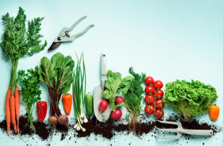 מארז 10 ירקות חורף/קיץ