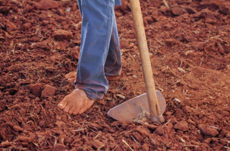 פוריות האדמה - מאמר העמקה