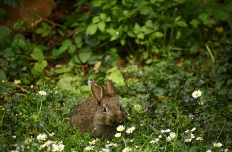 הוי ארנב!