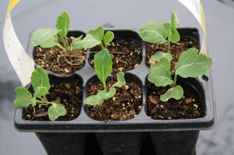 מארז זרעי ירקות רב שנתיים